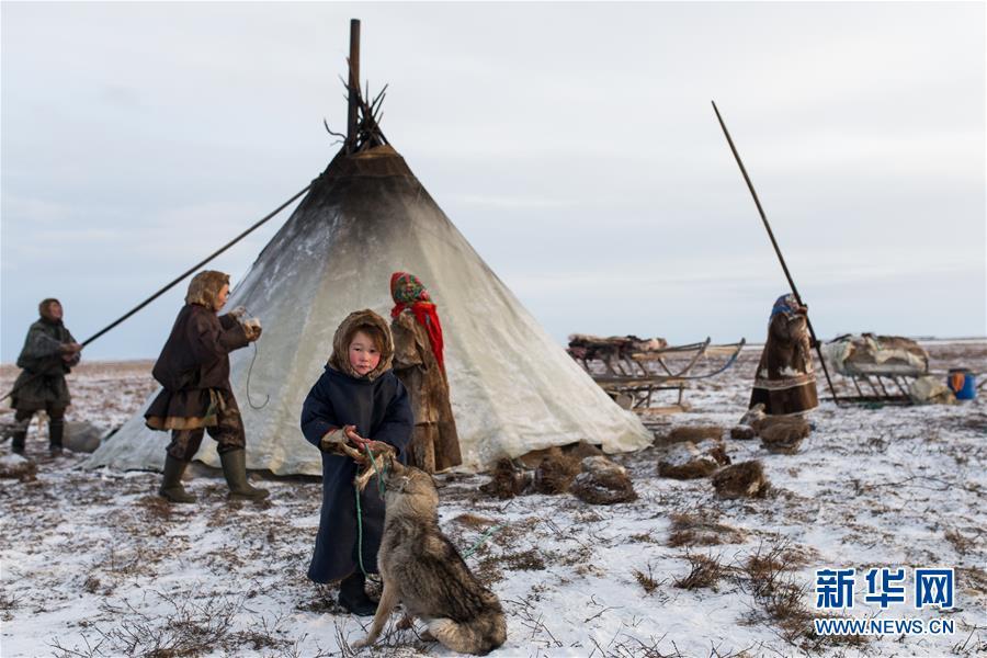 """(国际)(1)涅涅茨人――""""冰上丝路""""沿线的驯鹿牧民"""