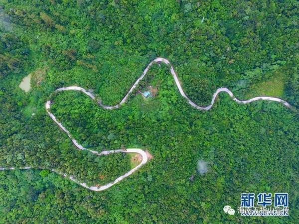航拍世界最大蟒蛇