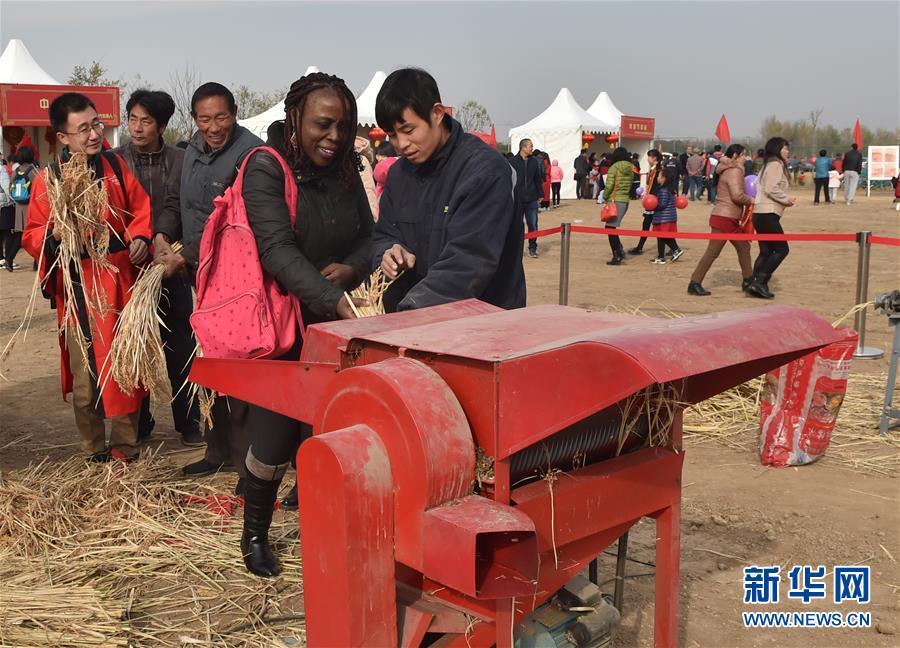 (社会)(1)北京顺义:收割水稻  体验农耕文化