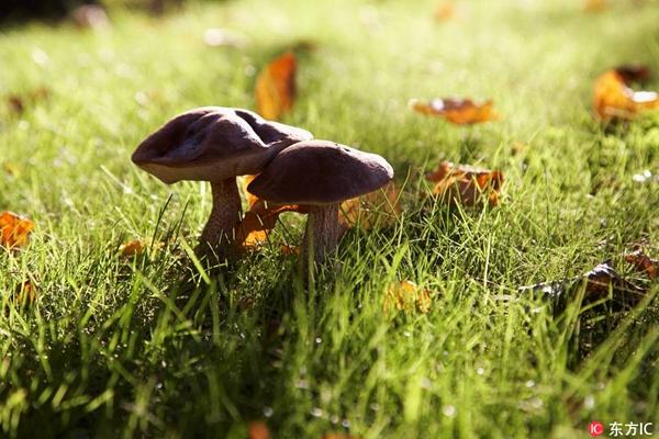 用蒜瓣或银器能辨别毒蘑菇?众多民间方法并不靠谱