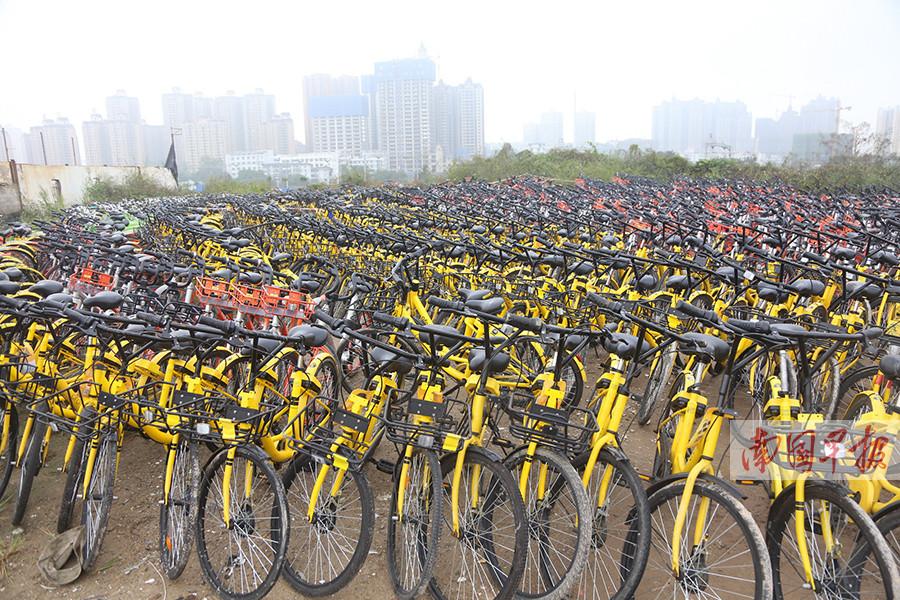 11月18日焦点图:南宁移交上千辆因违停被扣的共享单车