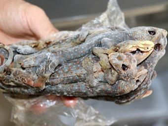广西破获一起运输珍贵野生动物制品案