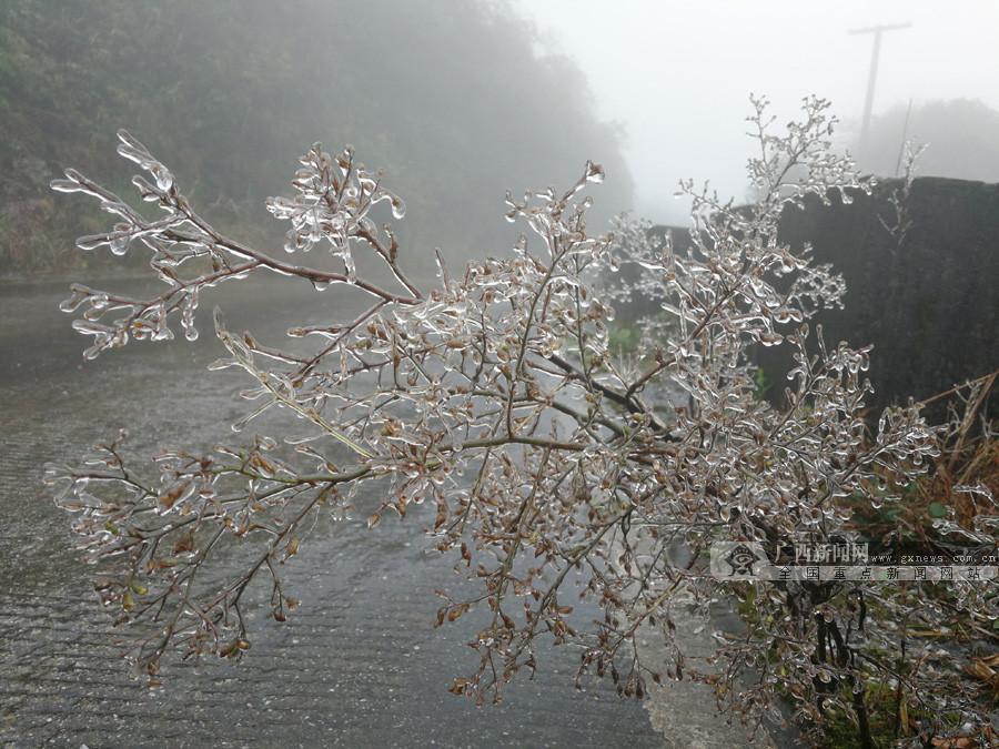 高清图集:冷空气来袭 大明山现冰凌雾凇景观