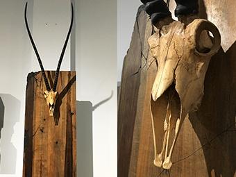 南宁匠人纪事:他用木头雕的羚羊头几可乱真(组图)