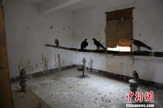 广东森林公安8月以来收缴象牙制品近56公斤