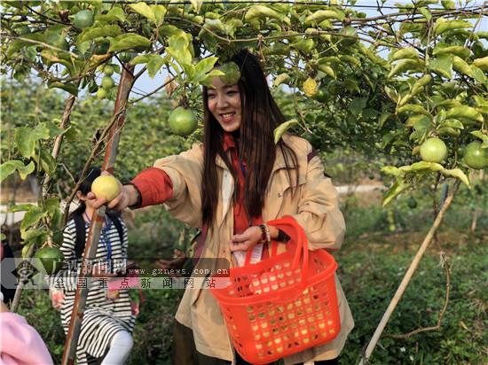 """全国网媒点赞平南""""活力龚州""""生态种养循环农业模式"""