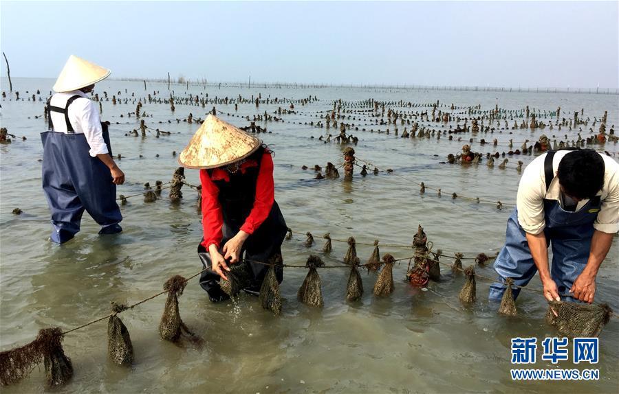 """广西北海市享有""""珠城""""美誉,源于其盛产有""""中国海水珍珠的皇后""""之"""