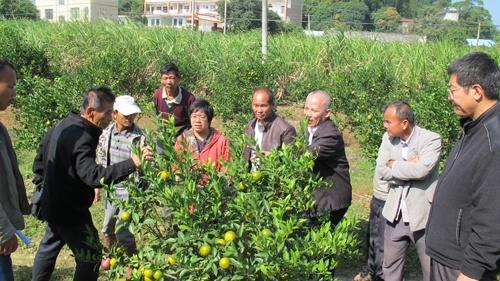 钦州市科协特种种植培训班开进贫困村