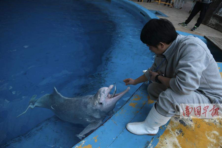 12月21日焦点图:南宁受伤中华白海豚被用于表演?