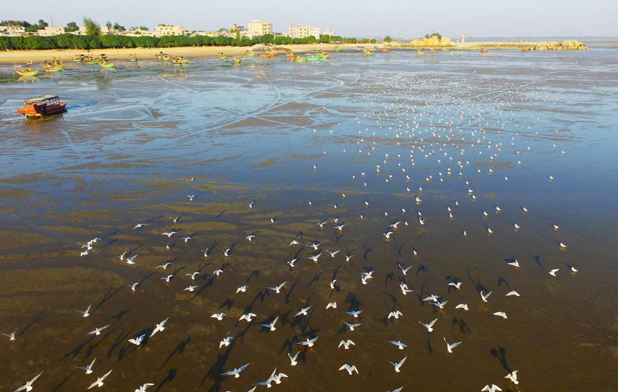 高清图集:钦州三娘湾成候鸟栖息天堂