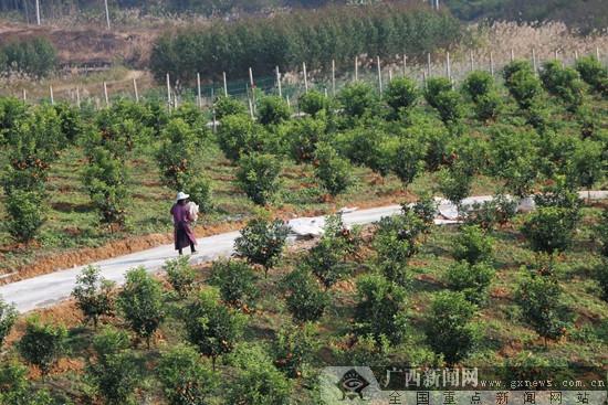 马山县:推进宜居乡村建设 多元发展让村民富起来