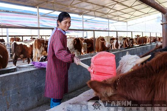 广西:打通扶贫产业流通血管 唤醒脱贫