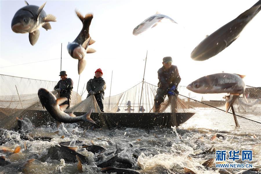 """#(社会)(1)年年有""""鱼"""""""