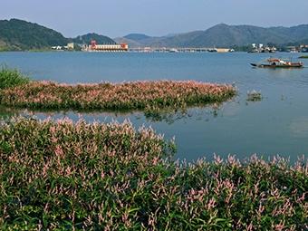 """西津国家湿地公园通过验收 """"国字招牌""""锦上添花"""