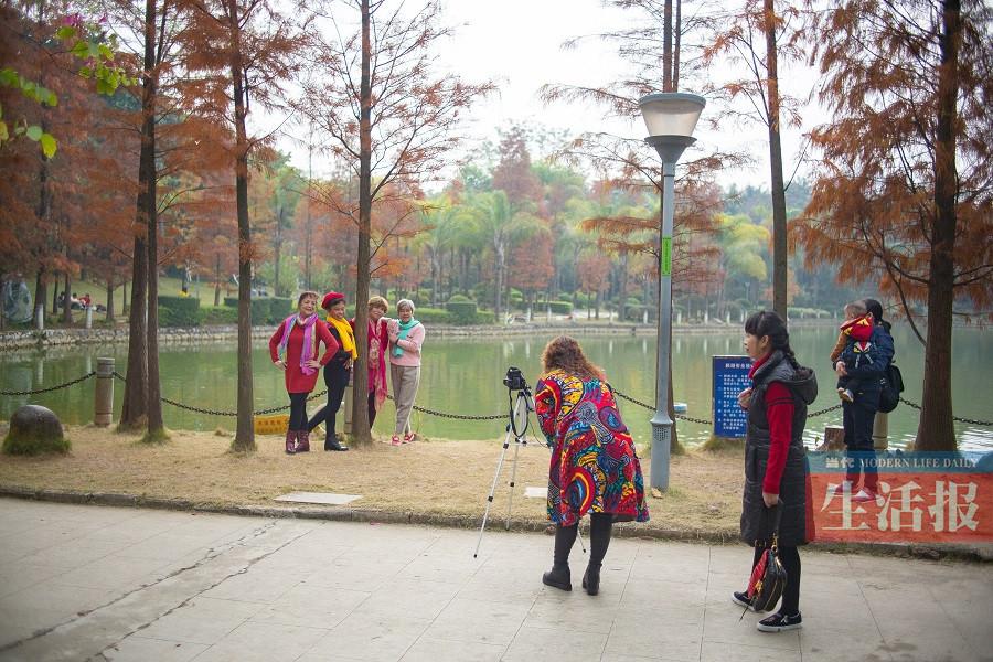 南宁金花茶公园落羽杉换上金黄新衣 赶紧来拍照吧