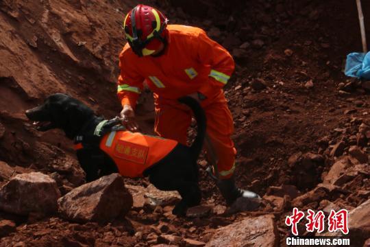 图为消防官兵带领搜救犬在现场救援 昭通市消防支队供图 摄