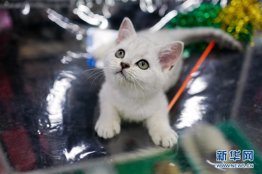 (国际)(3)萌猫总动员