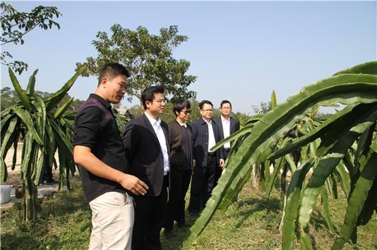 博白联社:金融扶持助力产业发展带动农民致富奔小康