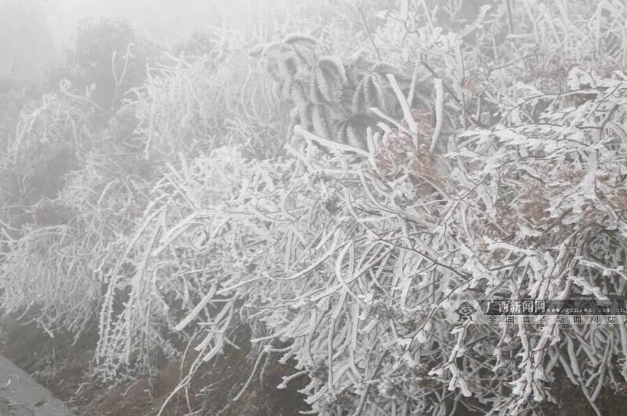广西发布道路结冰黄色预警 桂北出现冰雪景观(图)