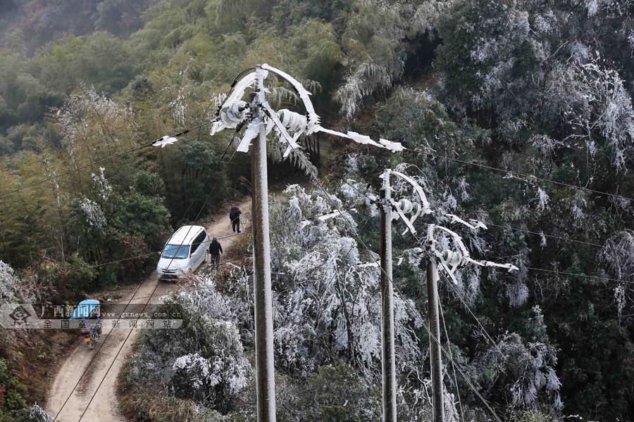 高清组图:融安现低温天气 树木挂冰凌