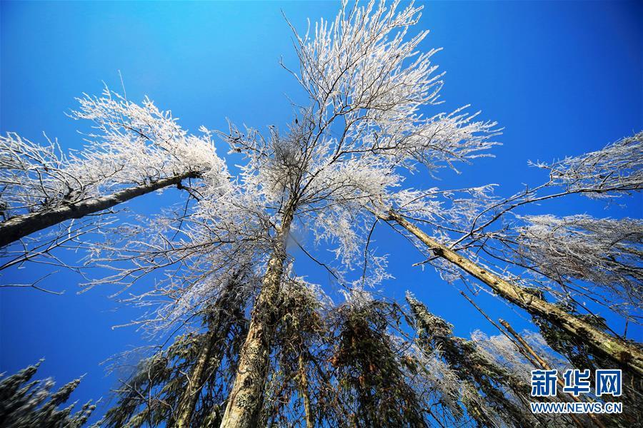 #(环境)(3)湖南湘西:南国之冬如童话世界