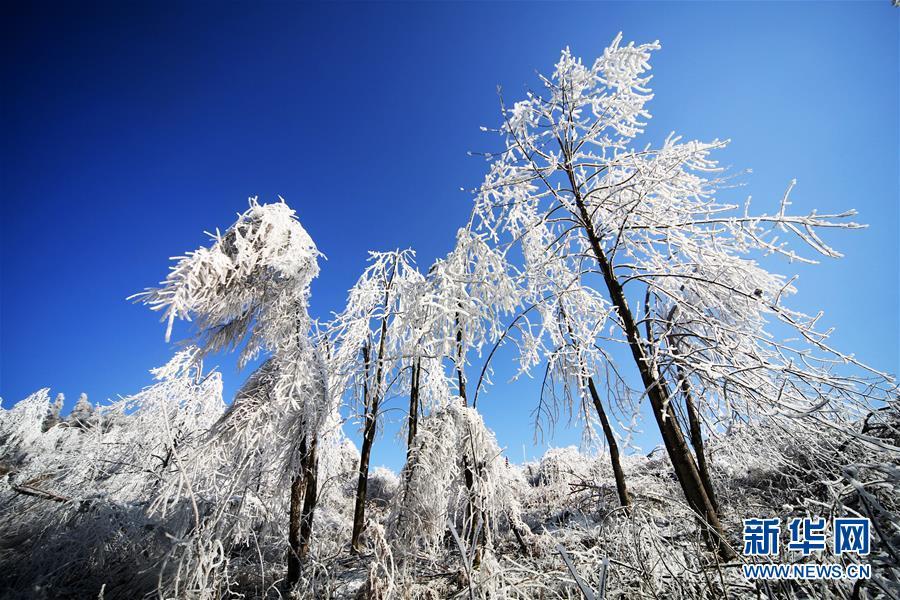 #(环境)(2)湖南湘西:南国之冬如童话世界