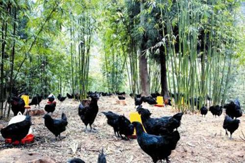 小小资源黑鸡——大大的宝藏