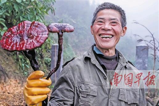 """西林县万余扶贫羊""""待字闺中"""" 村民为销路犯愁(图)"""