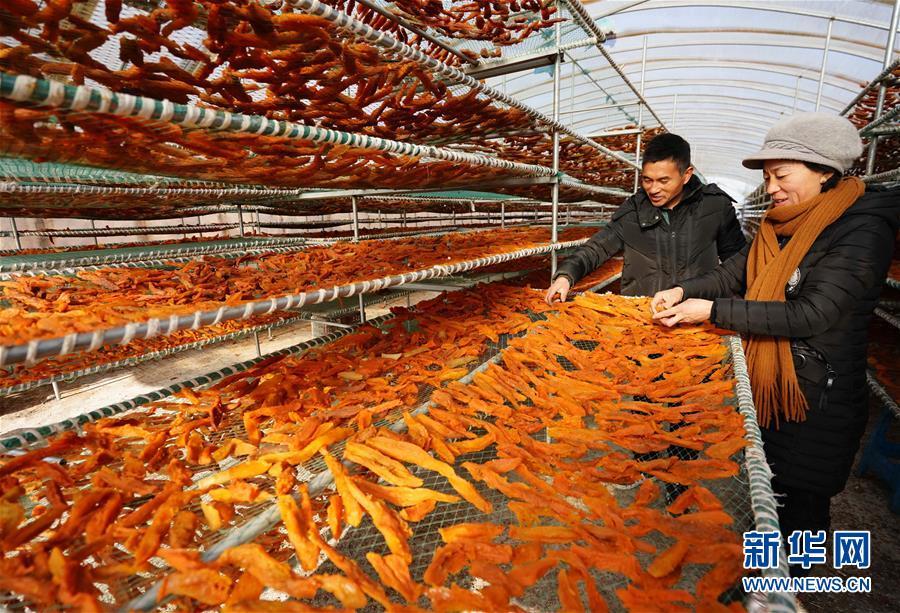 (经济)(2)河北卢龙:鲜食甘薯深加工促增收