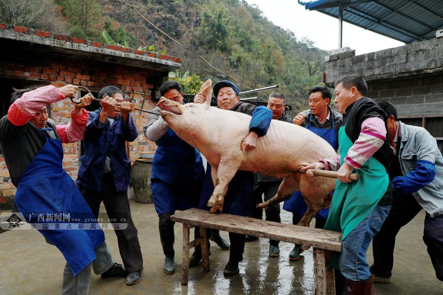 """高清:杀年猪吃""""刨汤"""" 感受浓浓的乡村年味"""