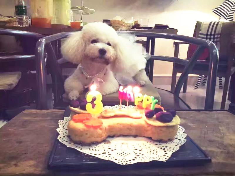 """职业""""新秀"""":给宠物做蛋糕 她接单接到手软(图)"""