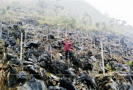 板升乡八好村发展刺葡萄种植 带动贫困户脱贫