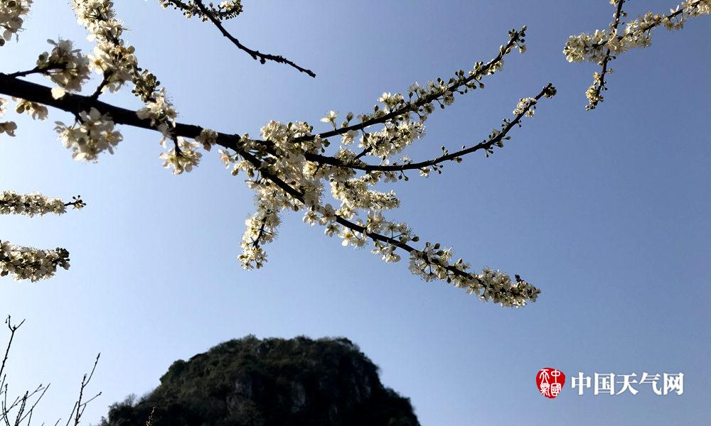 高清组图:柳州天晴冷 花儿凌寒开