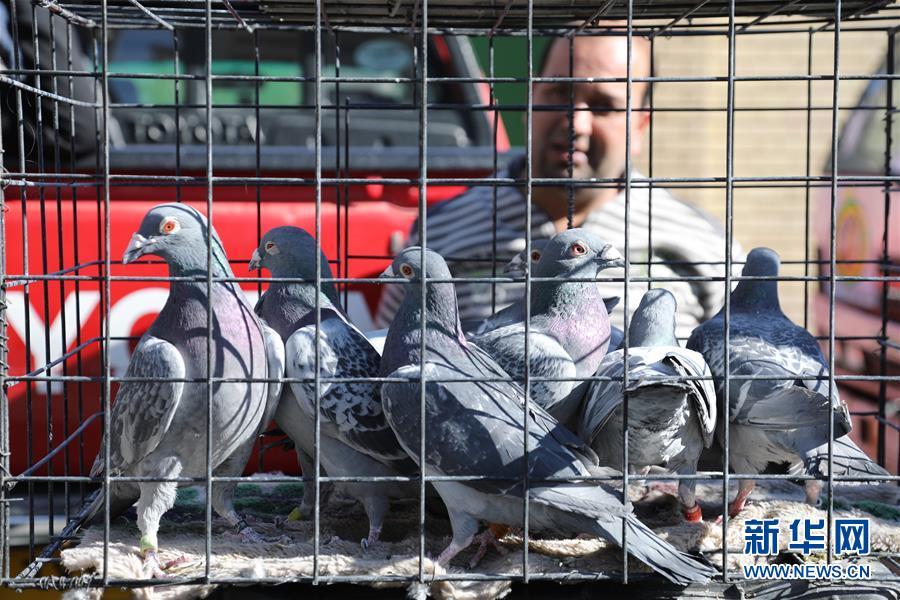 (国际)(1)重新热闹起来的巴格达宠物市场