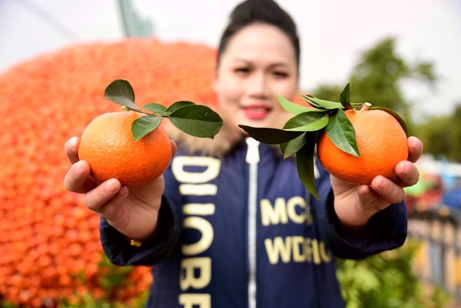 环江举办橘柑节 欢歌庆丰收(组图)