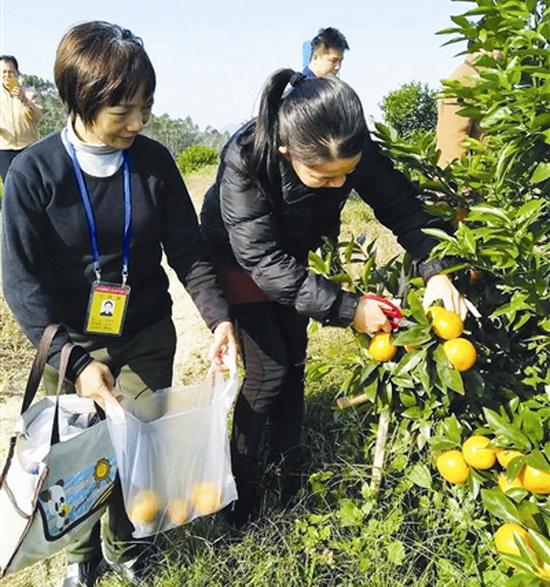 大化对农产品进行抽样检查