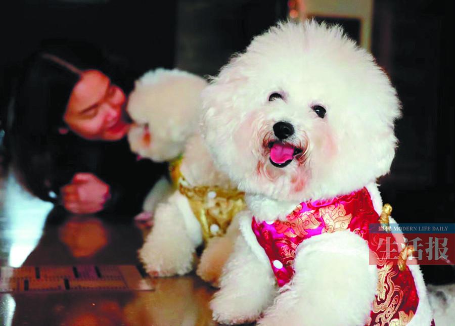"""家有""""汪星人"""":瑞犬来拜年 祝你旺旺旺(组图)"""