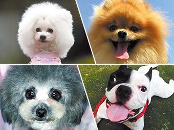 高清组图:瑞犬来拜年 祝你旺旺旺
