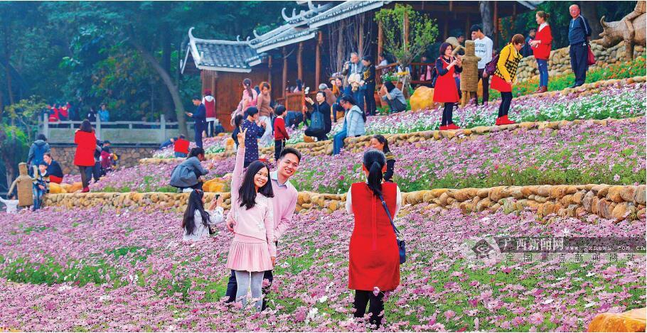 南宁市民赏花拍照 享受节日期间美好时光(高清)