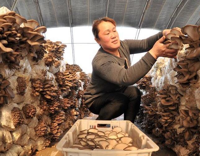 河北东光:特色种植开拓富民路