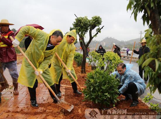 灵山县开展新春植树活动 种植绿化树苗600多株