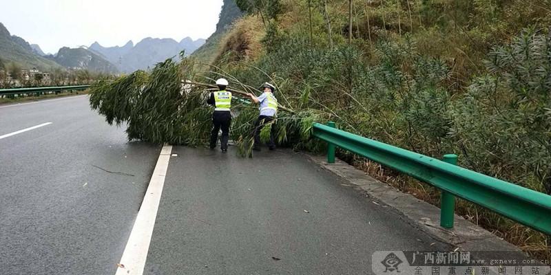 """河池:路树 """"占道"""" 横躺高速路 交警除隐患"""