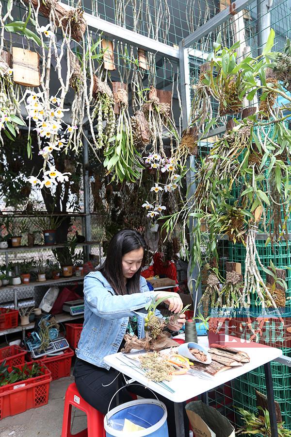 为创业奋斗!发现商机后仅一周 她的盆景店就开张了