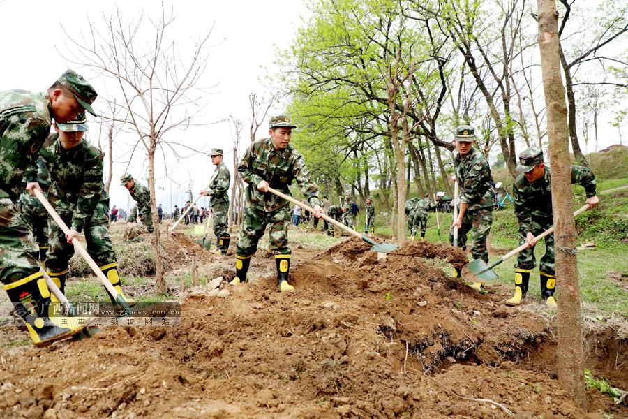 桂林消防官兵积极参加义务植树添新绿(图)