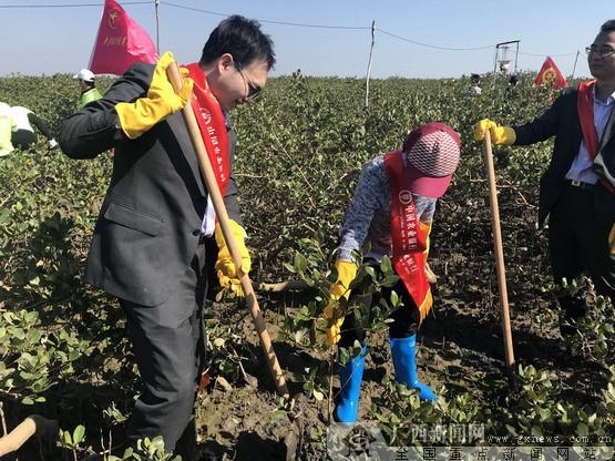 农行防城港分行积极组织参与植树造林活动