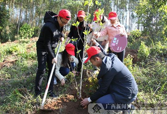 宁明县青年志愿者参加义务植树活动 种300株树苗