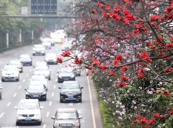 南国三月木棉红
