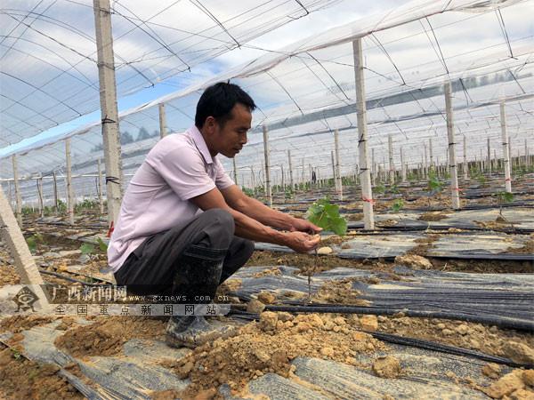 优化布局发展特色产业 梧州市长洲区推进乡村振兴