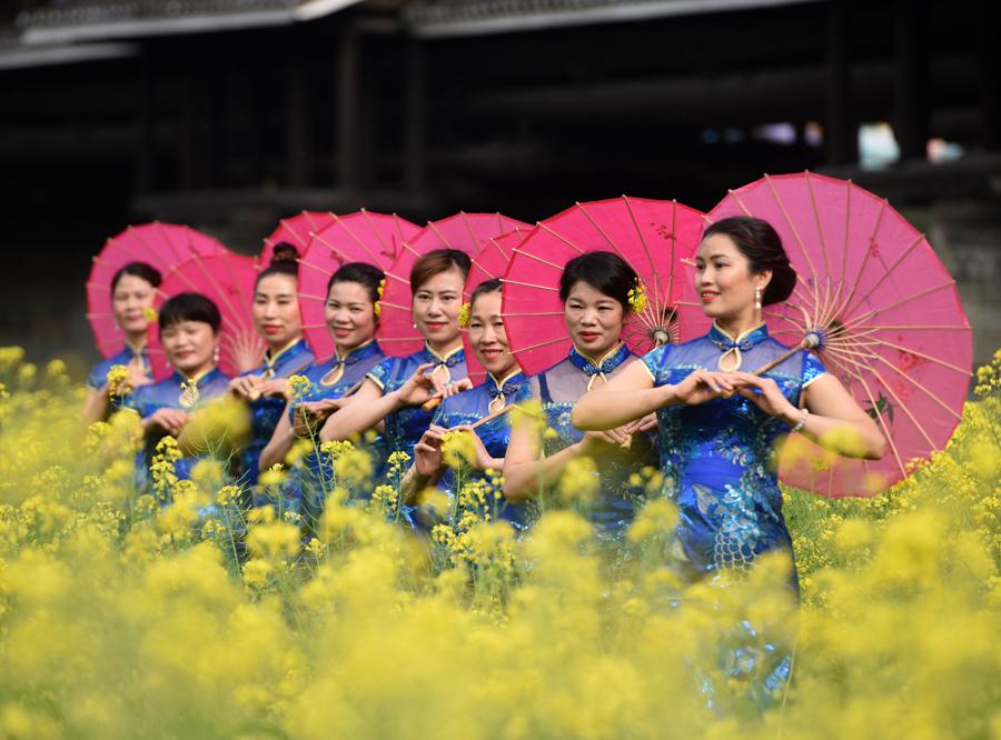 高清:春到三江风雨桥 佳人花田秀旗袍