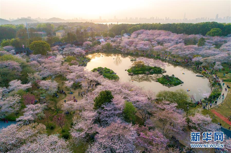(春季美丽生态)(1)武汉:樱花缤纷醉游人